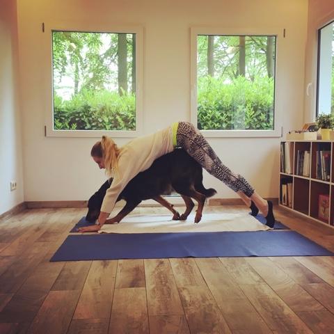 Workshop Yoga samen met je hond 28 maart